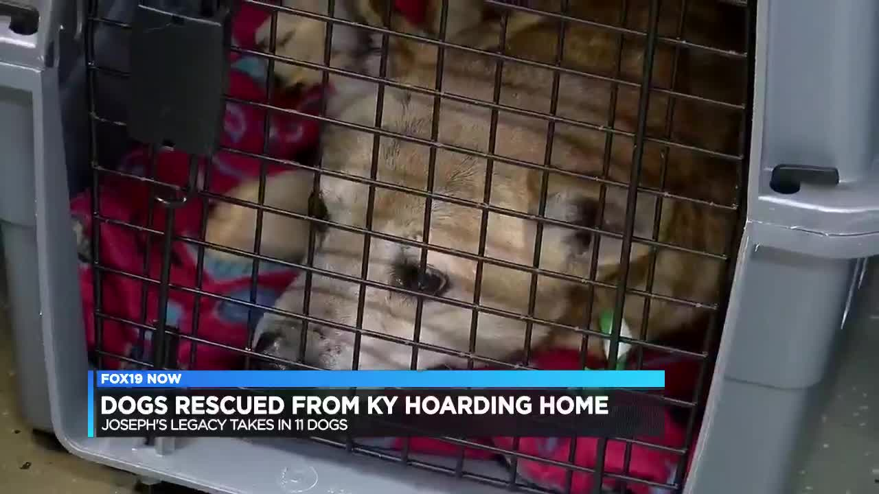 Local Rescue Saves 11 Dogs From Ky Hoarding Situation