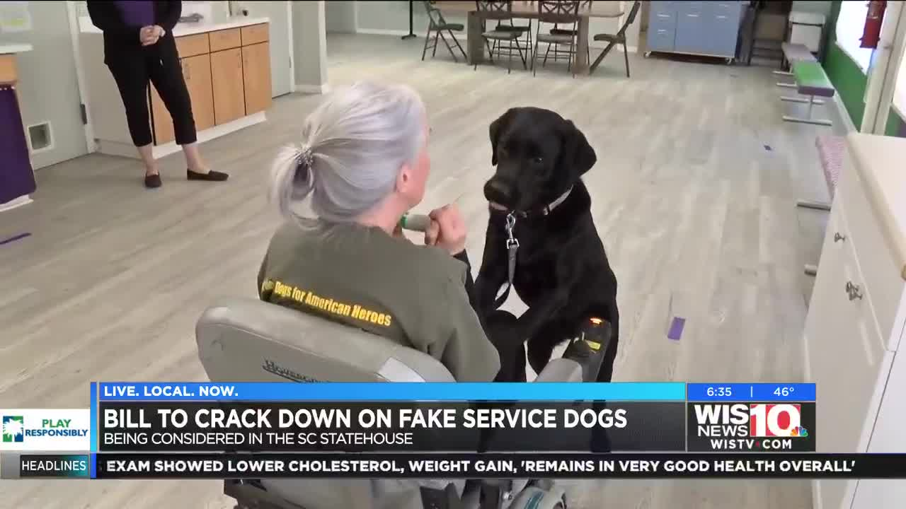 Proposed Bill At Sc Statehouse Could Make Fake Service Animals A Crime