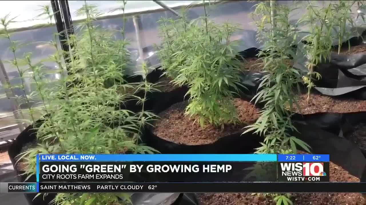 Hemp is the newest cash crop and job market in South Carolina