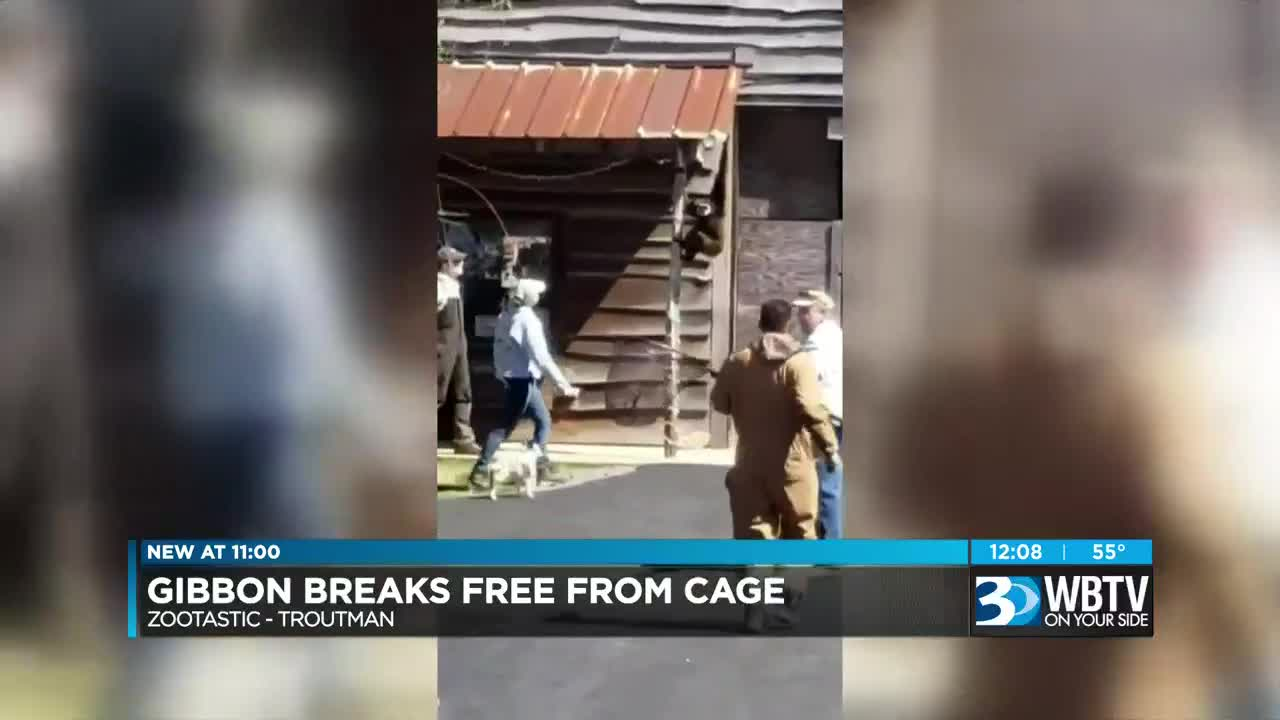 VIDEO: NC man records gibbon on the loose in Zootastic Park