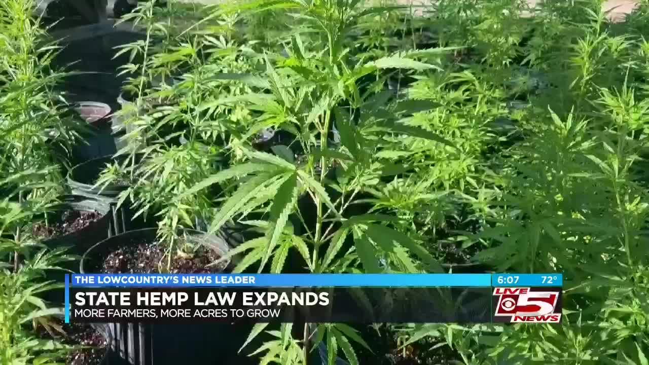 Gov  McMaster signs new law to expand state's hemp industry