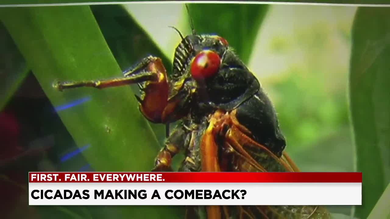 There's a buzz about cicadas coming back to Ohio this spring