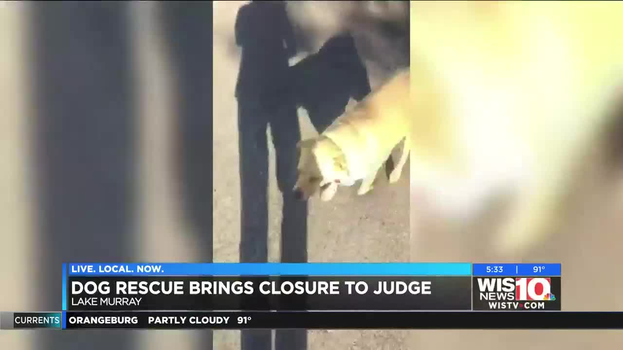Judge in Jones trial finds closure after loss of family dog, days