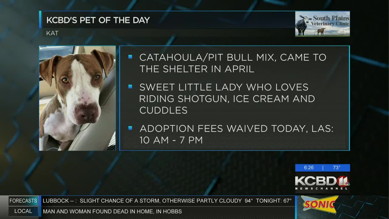 KCBD's Pet of the Day: Meet Kat (a dog)