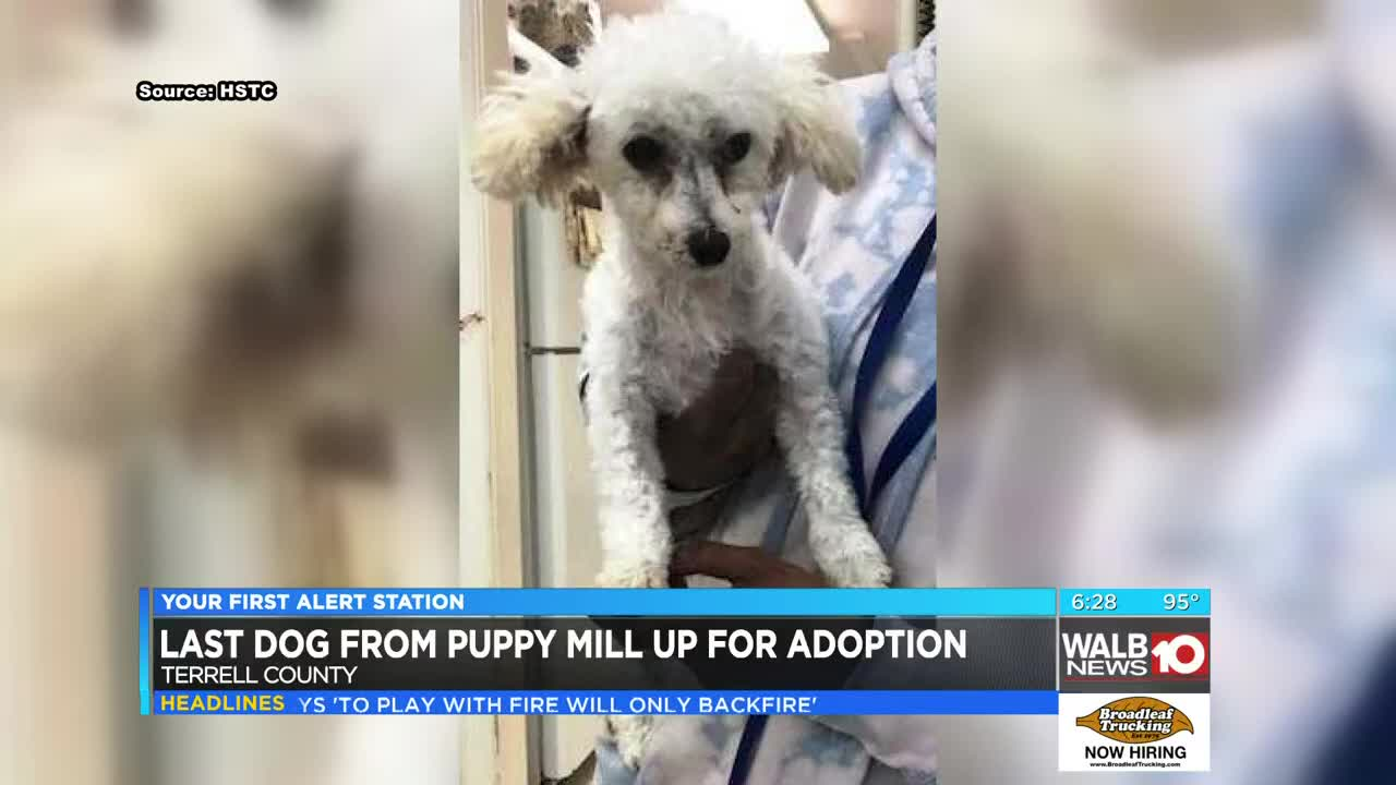 Only 1 more dog from Webster Co  puppy mill still looking