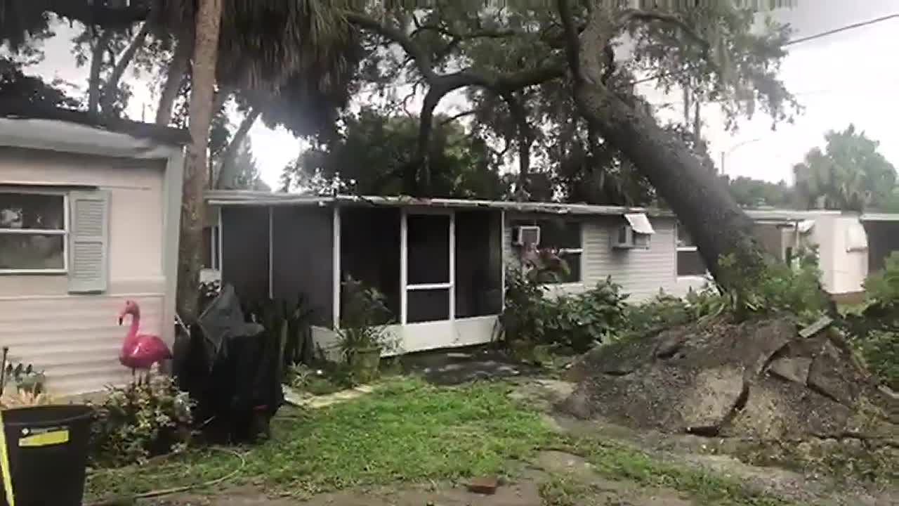 Wondrous Tree Falls On Mobile Home In Bradenton Download Free Architecture Designs Grimeyleaguecom