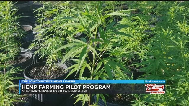 Lowcountry farmer is one of 20 selected to grow hemp in SC