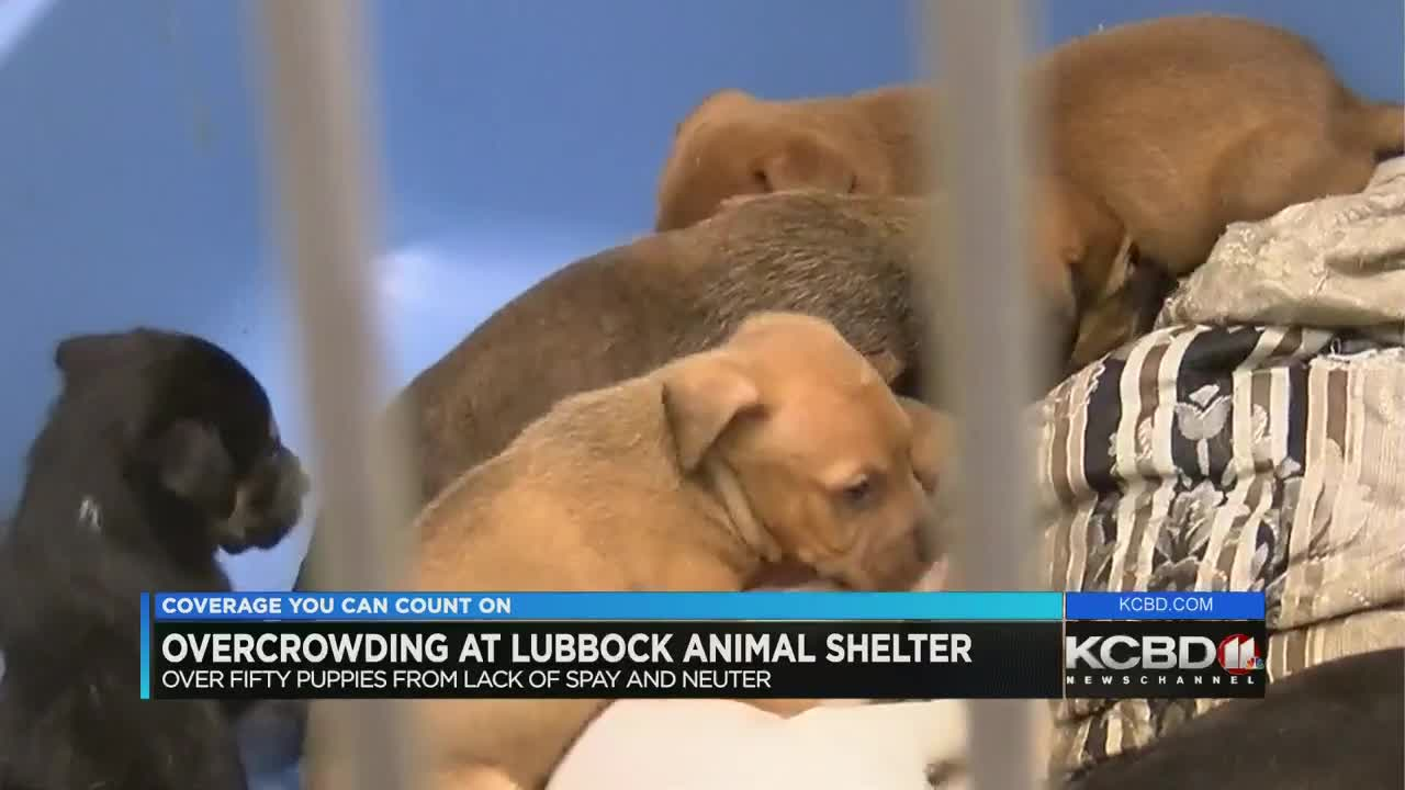 Hundreds Of Animals At The Lubbock Animal Shelter Are In Need Of